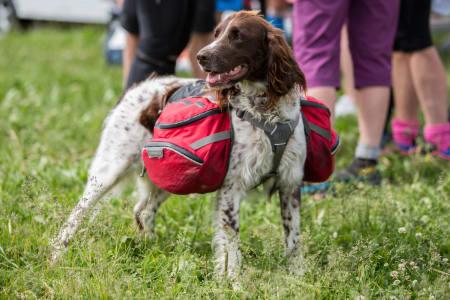 Turglade hunder får også være med. Det er en egen hundeklasse for deltagere med hund. Foto: Sylvain Cavatz