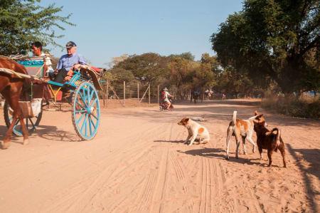 Hest og kjerre eller el-sykkel har blitt et populært alternativ til sykkel og taxi. Løshunder er overalt. I New Bagan, Old Bagan og Nyaung U er det mange muligheter for frokost, lunsj eller middag mellom etappene.