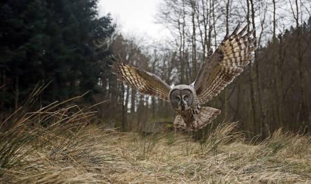Tom Schandy er en av flere fotografer som arbeider tett på den norske naturen og som tirsdag står på scenen i Oslo for å fortelle om utfordringer artene står ovenfor. Foto: Tom Schandy