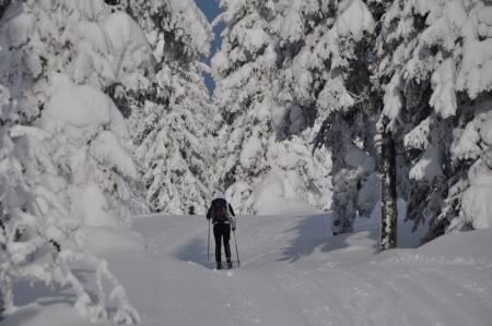 Gjennom friluftsliv vinterstid utvikles fornemmelsen for snø. Hvordan bidrar en tekstmelding fra idrettslagets smøreteam til å utvikle de unges kunnskaper om snø og føreforhold, spør kronikkforfatterne. Illustrasjonsfoto: Gunhild Aaslie Soldal