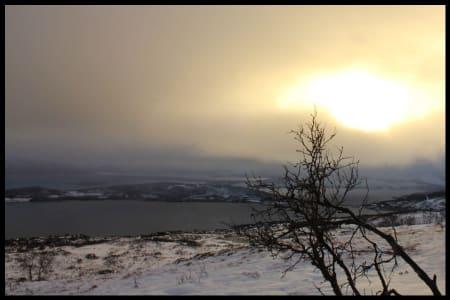 Tregrensen, halvveis til toppen. Litt av Håkøya i bakgrunnen.