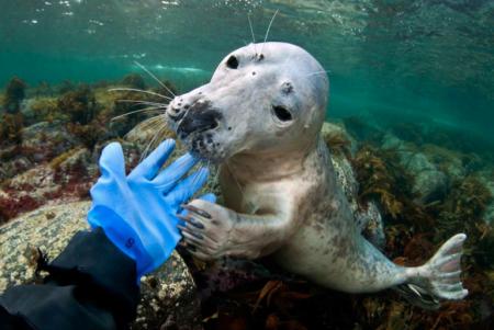 Lill Haugen liker seg best under havoverflaten, der det eneste hun kan høre er sin egen pust. Foto: Lill Haugen