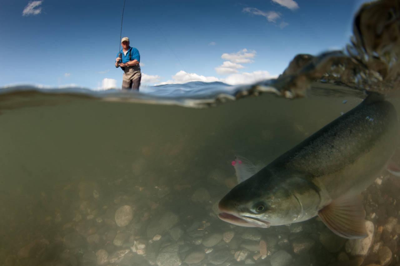 Chunilna Creek alaska fisketur