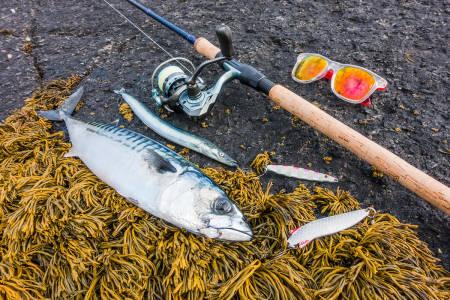 makrell fiske fisking