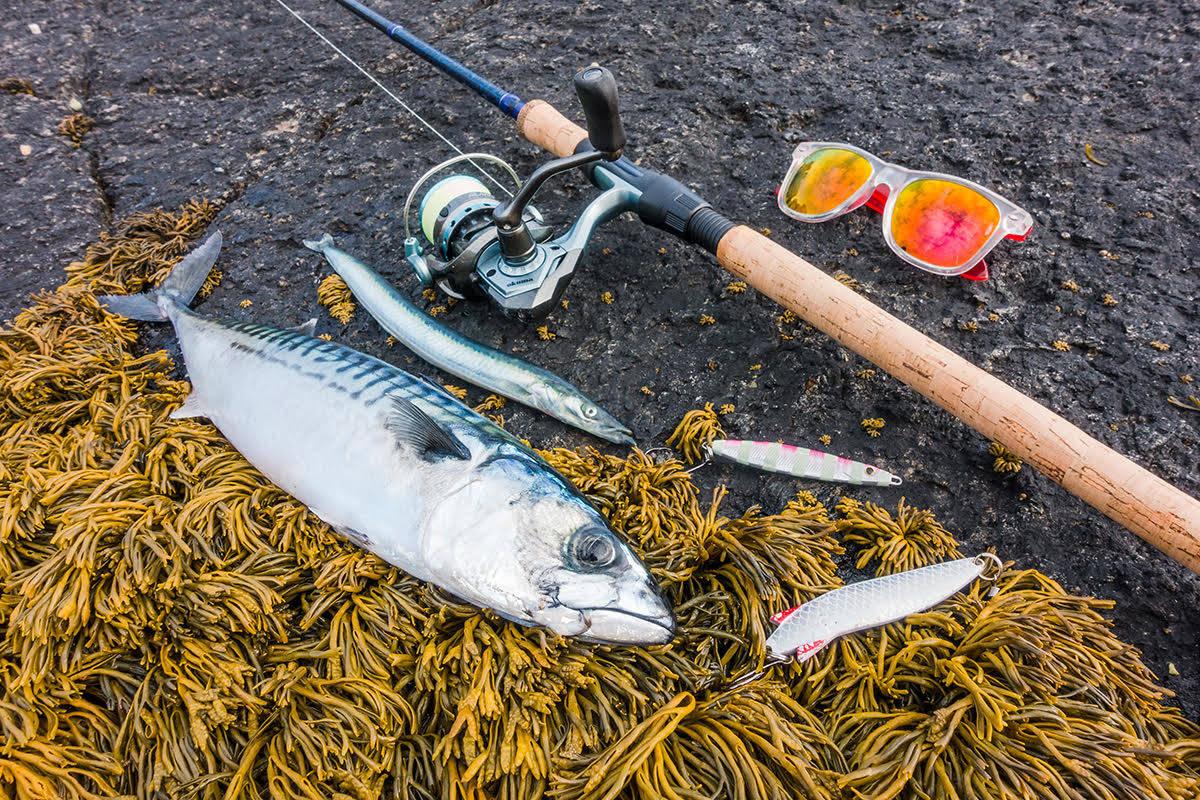 makrell fiske svabergfiske