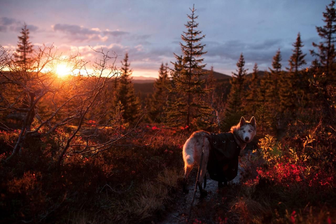 MANGE MULIGHETER: I Skrimfjella er det mange hytter å velge mellom, du kan gå fine langturer eller kortere helgeturer. Området er vakkert om høsten og snørikt om vinteren. Foto: Marte Stensland Jørgensen