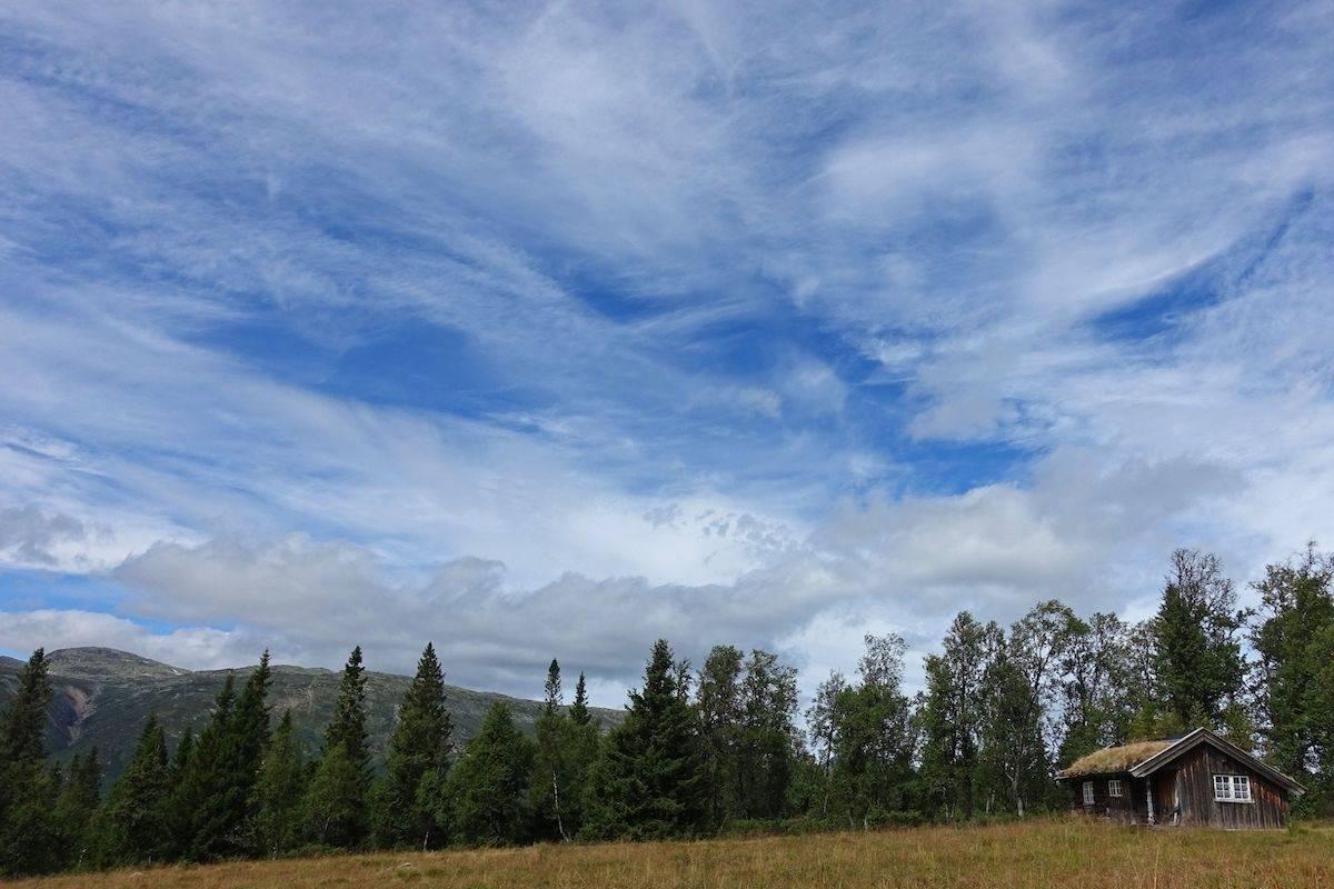 Svalastogjuvstaul med Raulandsfjell i bakgrunn. (Foto: Erlend Larsen)