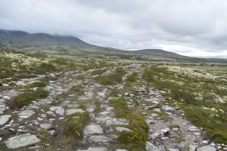 Naturrestaurering i rondane
