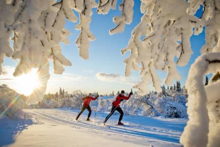 I langrennssporene rundt Trysil kan du gå milevis på ski. Totalt er det over 500 kilometer med langrennsløyper 100 av dem ligger i og rundt Trysilfjellet. Foto: Ola Matsson