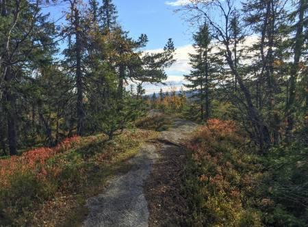 OSLONÆRT: Langs ryggen av Pershusfjellet i Nordmarka finner du en lite brukt drømmesti. Foto: Bjørnar Eidsmo