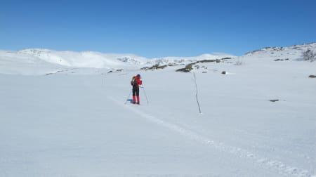 BUSKERUD: Folarskardnuten, Hol kommune (1933 moh.) Toppen er en del av Hallingskarvet og er i tillegg til å være det høyeste fjellet i Buskerud, det høyeste fjellet i Norge sør for Jotunheimen.  Hallingskarvet er et populært område for de som liker å gå lange turer på ski, og på fjellski fikk vi en lang og fin tur. Turen er en forholdsvis lett tur med noe bratt stigning helt på slutten, men den er absolutt en som jeg husker var ganske lang. Det kan godt ha noe med at vi gikk store deler av turen i sterk motvind, men toppen nådde vi, og med vinden i ryggen koste vi oss med en praktfull utsikt.