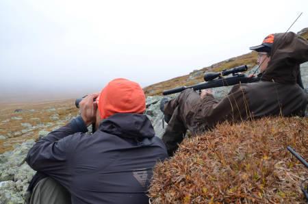 KLARE: Helge Wangberg og Robert Lappegard har akkurat fått beskjed over sambandet om at det er fem reinsbukker på vei i tåkehavet.