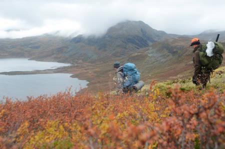SISTE GANG: Blir det siste gang med reinsjakt i Nordfjella i år? Det ser dessverre slik ut.