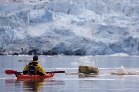 NÆRKONTAKT: Kajakken gir mulighet til å gli lydløst i vannet og hilse på storkobben.