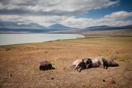 LIVETS GANG: Javakheti-platået. Foto: Hans Aage