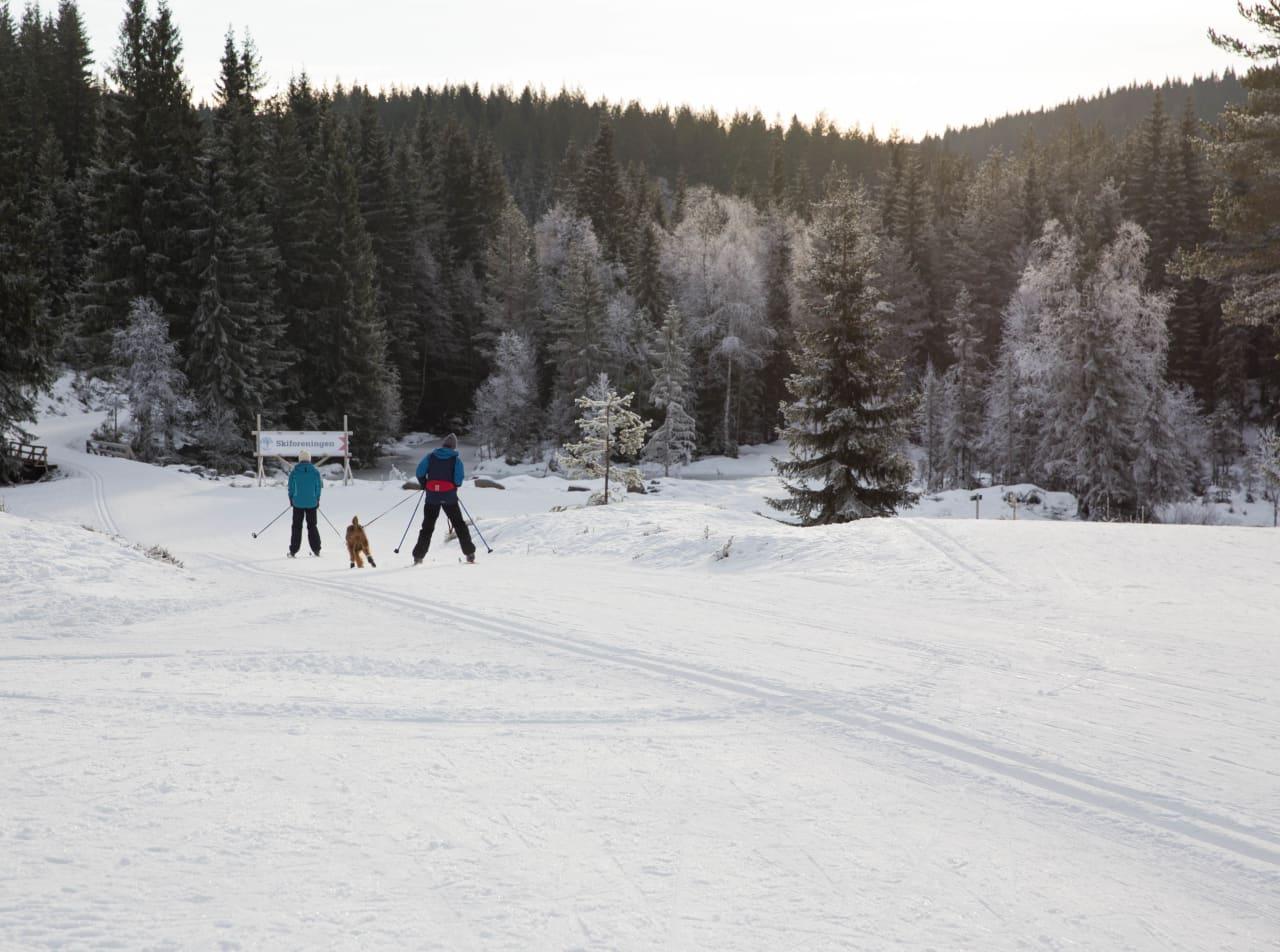 BROVOLL: Her er det milevis med skiløyper som ligger klare både for to og firbente. Foto: Lillian Langseth