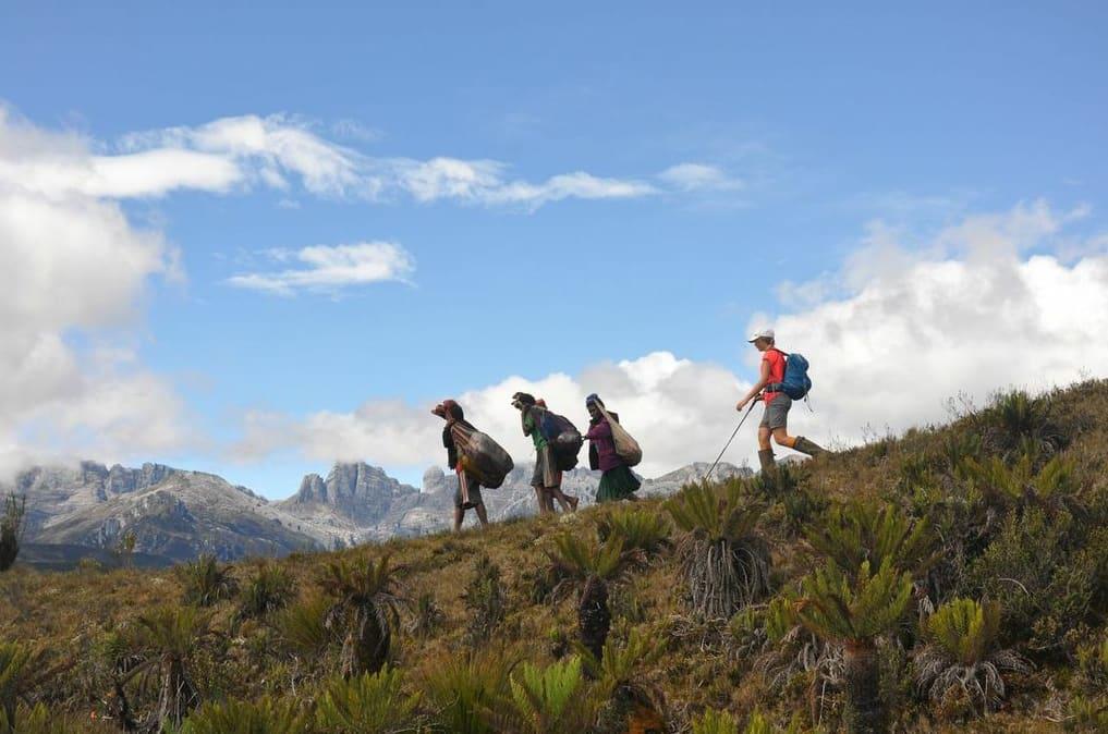 Endelig på høyplatået: Etter to dager blodslit gjennom jungelen lokker Sudriman-kjeden og Carstensz Pyramid i bakgrunnen. Foto: Gerhard Tost
