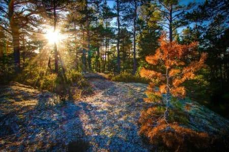 STJERNESOL: Plasser solen bak et tre. Med liten blender, så får man en fin stjerneeffekt. Bildedata: Lukkertid: 1/80s. Blenderåpning: f/10. Lysfølsomhet: ISO 400. Brennvidde: 16mm