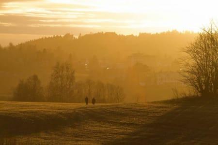 UTNYTT SOLSTRÅLENE SENHØSTES: Når solen kryper såvidt over horisonten, så kan man få et fint og varmt uttrykk. Bildet her er fra jordene ved Østensjø gård. Lukkertid: 1/320s. Blenderåpning: f/8. Lysfølsomhet: ISO 400. Brennvidde: 230mm. Foto: Snorre Veggan