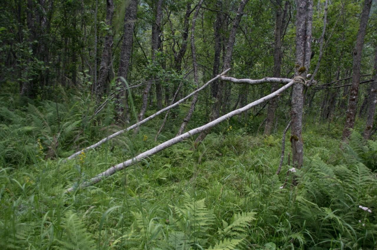 Sidestokkene går fra tverrliggeren og skrått ned mot bakken. For å få nok liggeplass bør disse være 3-4 meter lange.