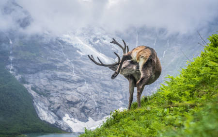 vegard aasen naturfotograf