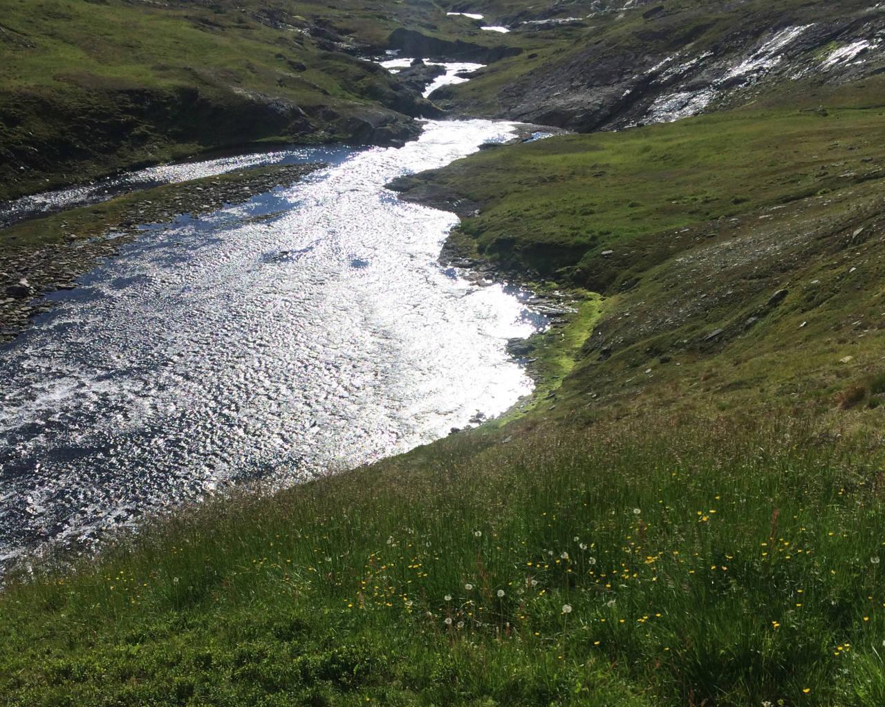 SETT FRA EN BOTANIKERS STÅSTED: Fra feltarbeid i et fantastisk område ved Linnavatn i Nordland, som er sjeldent rikt på mineraler. Det preger også floraen. I forgrunnen av bildet ser vi rik berggrunn med blomstereng, og fattig lynghei til høyre. Linnavatn er et av stedene hvor dramatisk geologi gir dramatisk vegetasjon, skriver Hanna Hagen Bjørgaas